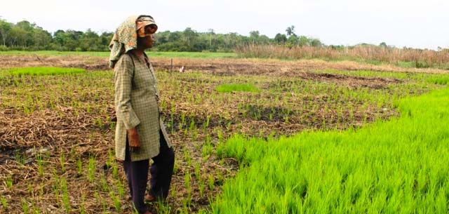 Infobrief: Kemandirian Petani Dari Subsidi dan Korporasi