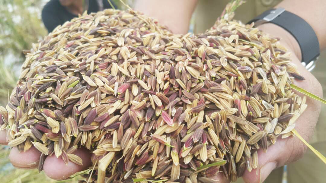 Local Seeds in the Midst of Global Virus Epidemic